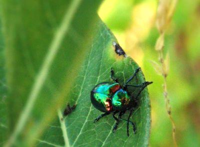 insektenfrei durch Fliegengitter